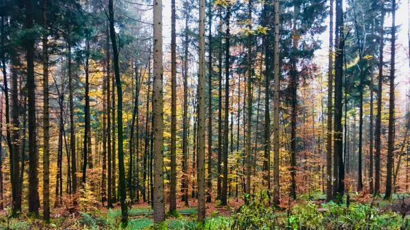 Farbenspiel im Herbstwald