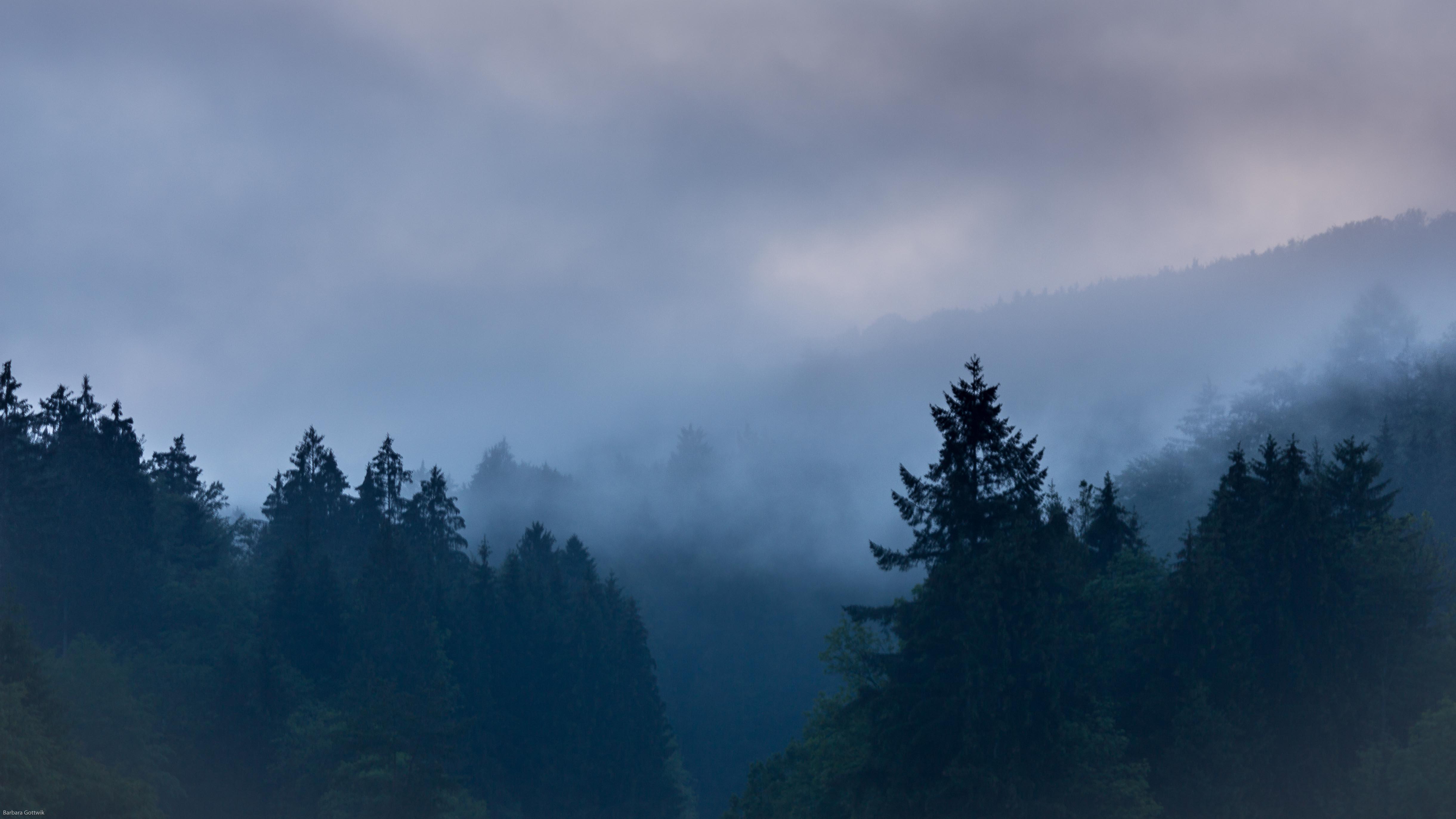 Nebel im Juni
