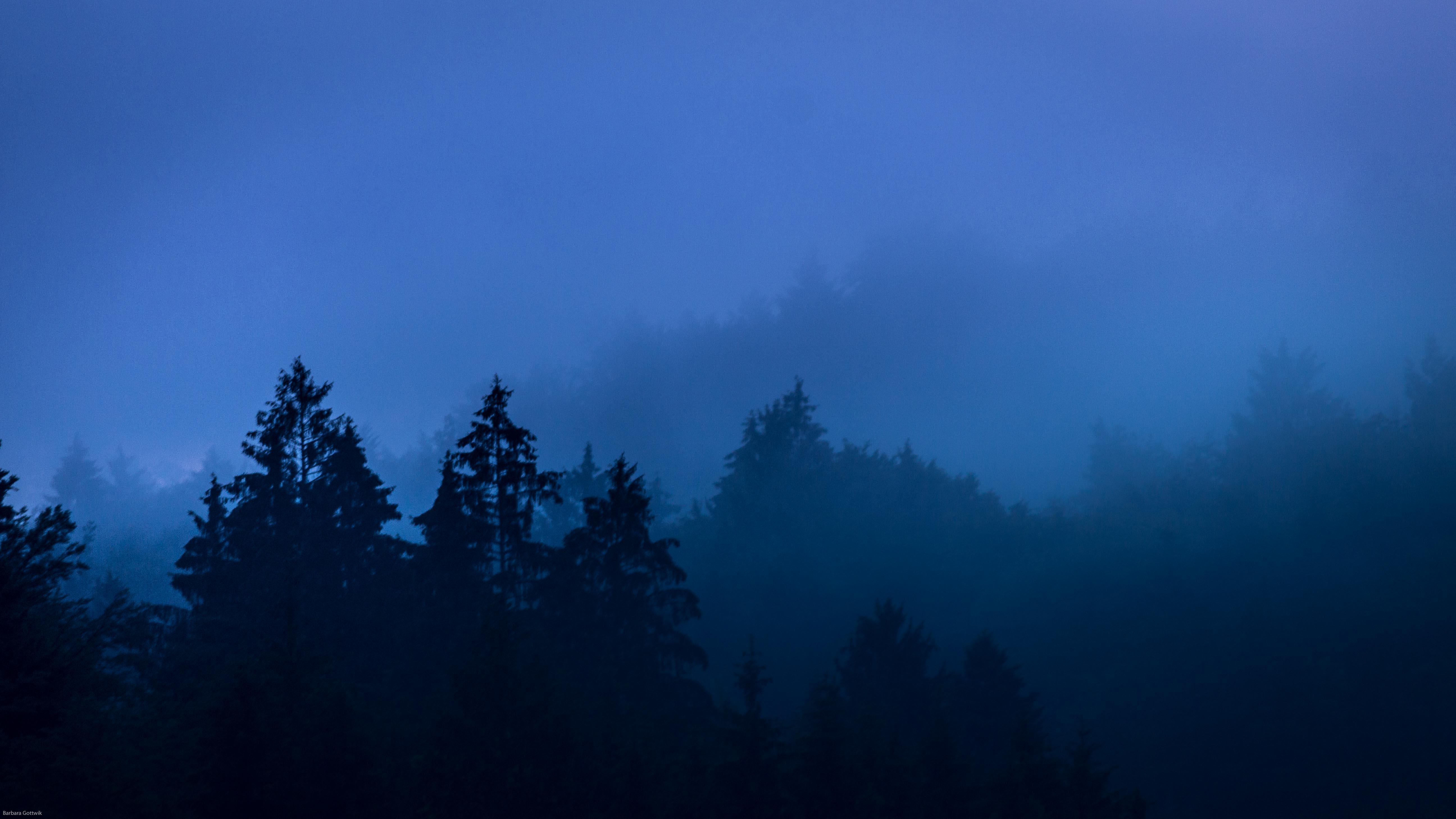Nebel steigt aus den Wäldern im Juni