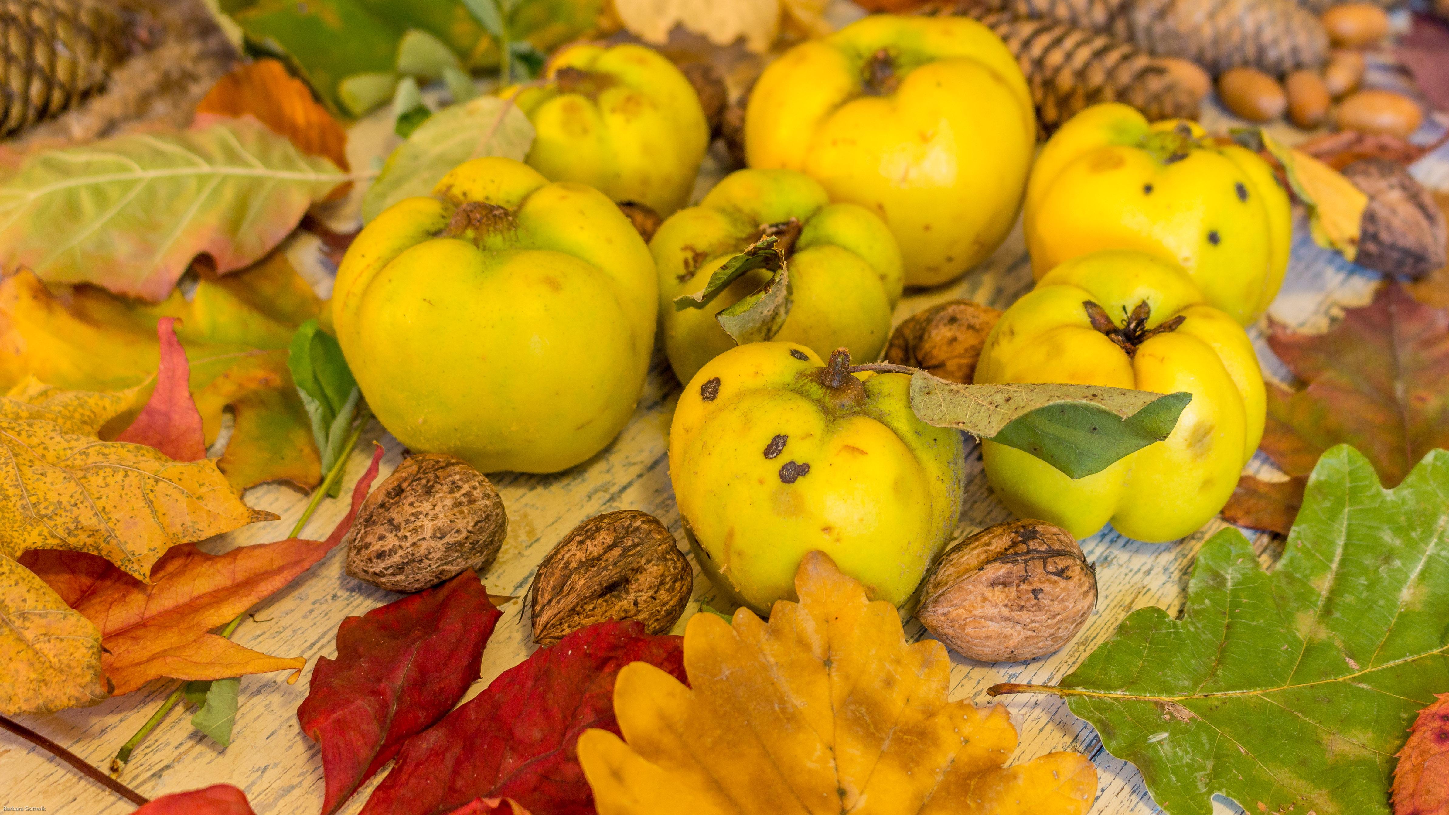 Herbstlaub und Quitten