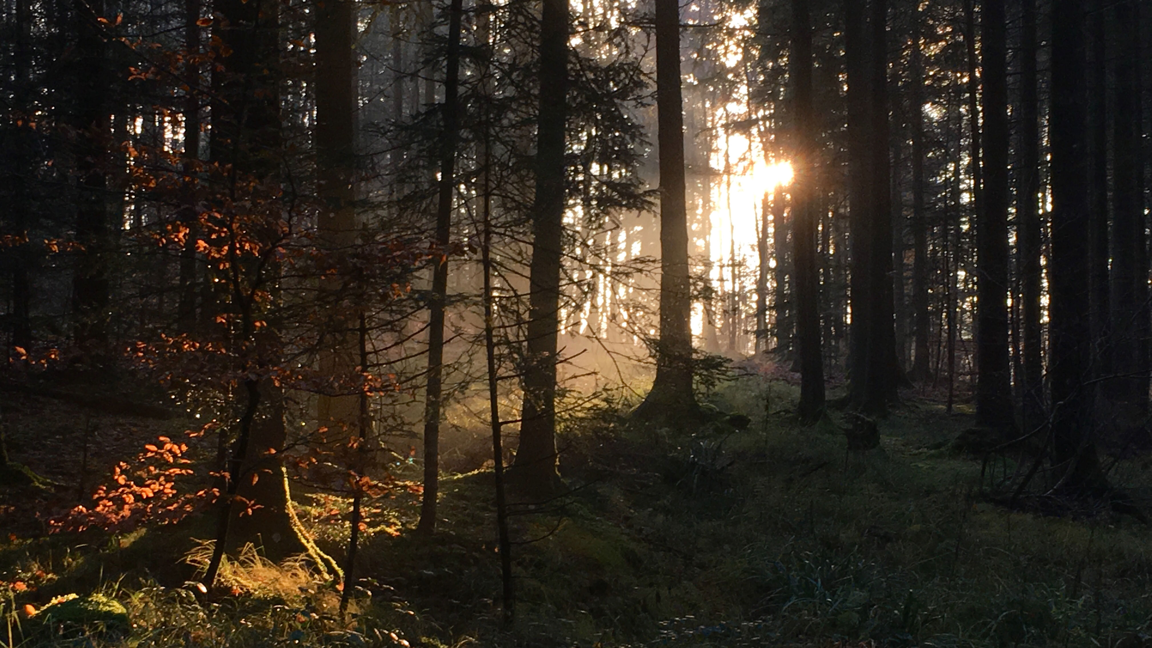 Plötzlich im Zauberwald